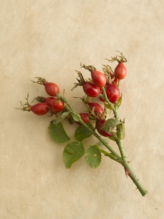 wildberry: Spray of rose hips on beige background LANG_EVOIMAGES