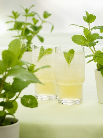 minted: Minted Bourbon (Bourbon with mint, syrup and soda water)
