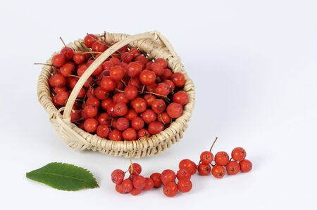 wildberry: Rowan berries in a small basket LANG_EVOIMAGES