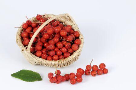 sorbus: Rowan berries in a small basket LANG_EVOIMAGES