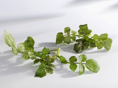 water cress: Watercress