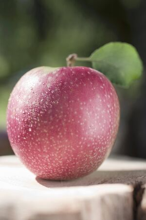 open air: A red apple in the open air