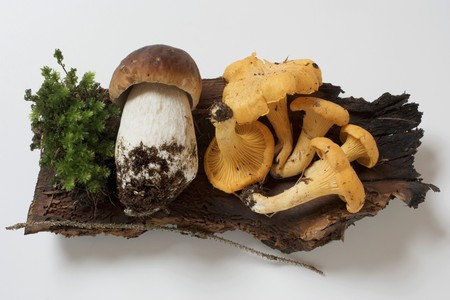cep: Cep and chanterelles on piece of wood