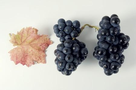 domina: Black grapes, variety Domina, with leaf LANG_EVOIMAGES