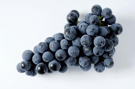 regent: Black grapes, variety Regent