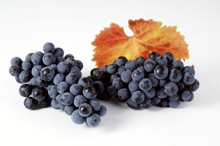 regent: Black grapes, variety Regent, with leaf