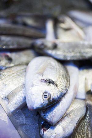 sea bream: Fresh sea bream at a market