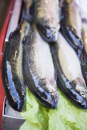 salmo trutta: Fresh trout at a market