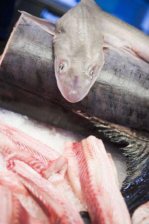 tunafish: Various types of fresh fish at a market