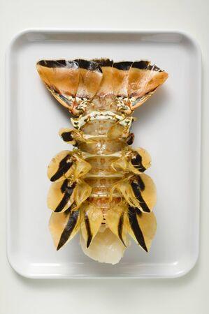marine crustaceans: Slipper lobster, underside