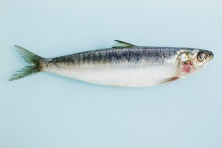 anchovy: An anchovy