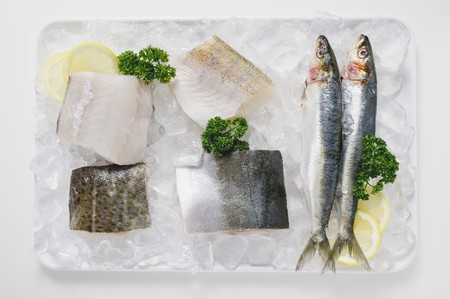 salmo trutta: Various types of fish on a platter of ice
