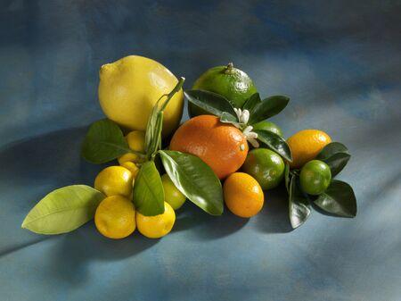 감귤류의 과일: Assorted citrus fruits