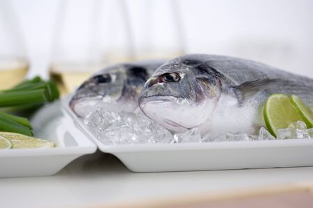 sea bream: Two sea bream on ice LANG_EVOIMAGES