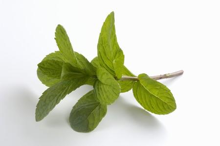 hemingway: A sprig of mint (Hemingway mint)