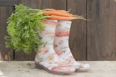wellie: Carrots on top of rubber boots
