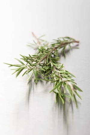 metal surface: Rosemary on a metal surface