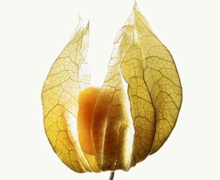 cape gooseberry: Physalis in its husk