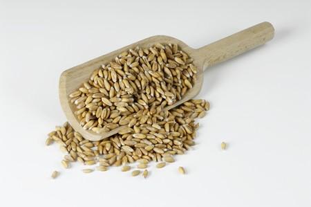 wooden scoop: Spelt on a wooden scoop