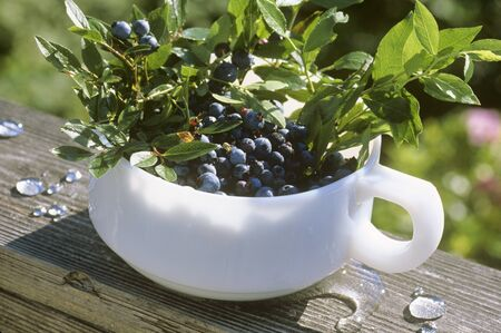 wildberry: Fresh Picked Wild Maine Blueberries in a Handled Bowl