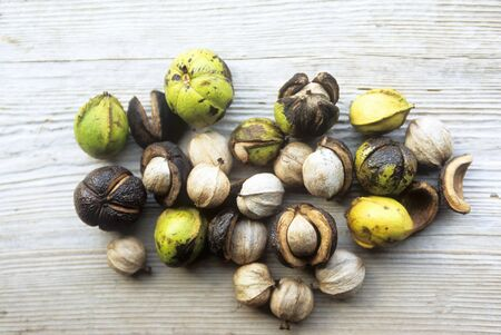 hickory nuts: Wild Hickory Nuts on Wood