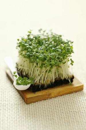 arugola: Rocket sprouts