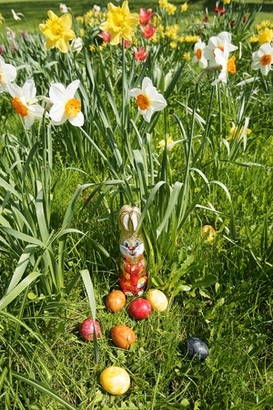 sweet grasses: Easter Bunny and eggs in grass with narcissi in background