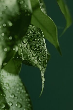 dewdrops: Dewdrops on leaves