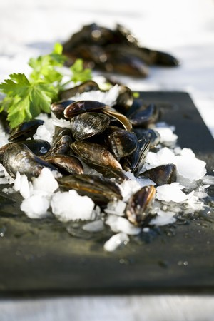 ice crushed: Mussels on crushed ice with parsley