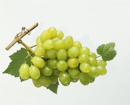 wijnbladeren: Groene druiven met wijnbladeren en ochtenddauw LANG_EVOIMAGES