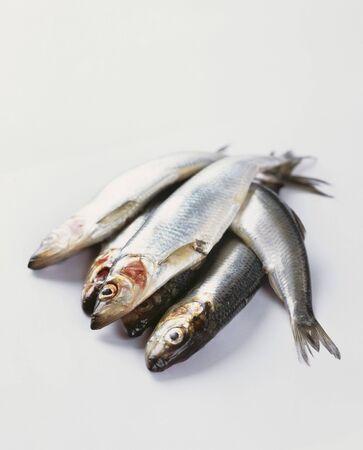 sardinas: Varios sardinas frescas