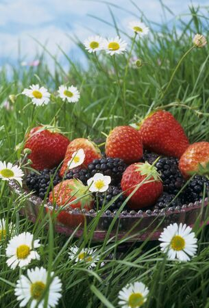 Bowl of strawberries and blackberries in grass with daisies LANG_EVOIMAGES