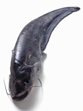 Whole fresh catfish LANG_EVOIMAGES