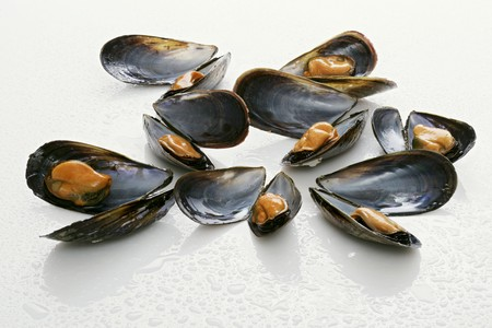 molluscs: Mussels, opened, with drops of water