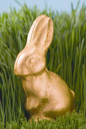 sweet grasses: Easter Bunny in grass LANG_EVOIMAGES