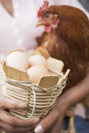 farmyards: Woman holding live hen and basket of eggs LANG_EVOIMAGES