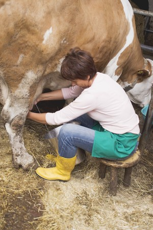 farmyards: Cow being milked LANG_EVOIMAGES