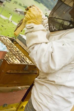 tending: Beekeeper tending beehive