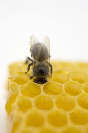 aaa: Bee on honeycomb (close-up)