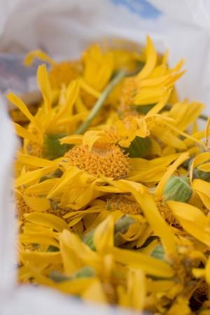 Arnica: Drying arnica flowers