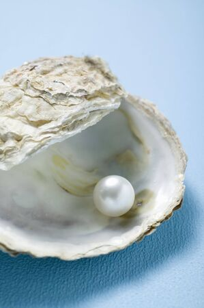 oyster shell: Pearl in oyster shell