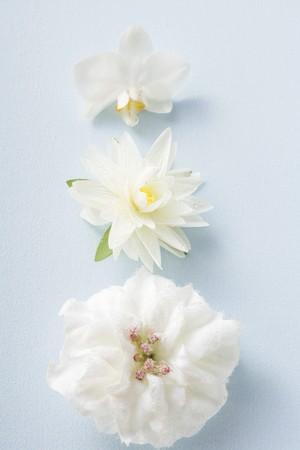 nymphaea odorata: Three different white flowers