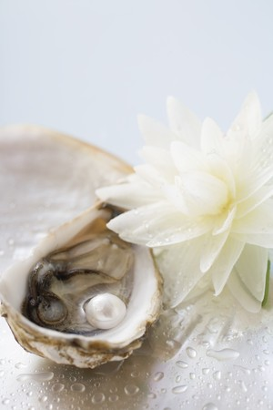 nymphaea odorata: Fresh oyster with pearl, white water lily beside it