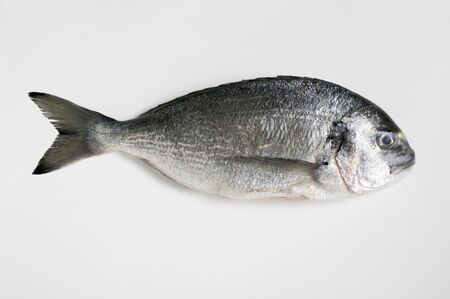gilthead bream: Gilthead bream LANG_EVOIMAGES