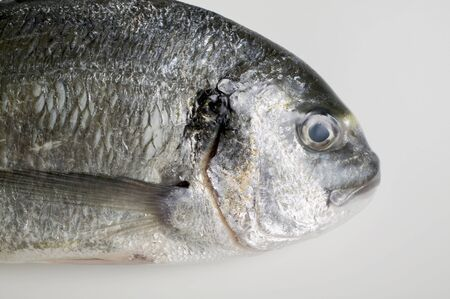 gilthead bream: Gilthead bream (head)