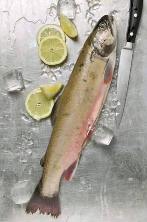 salmo trutta: Fresh salmon trout, ice cubes and lemon slices