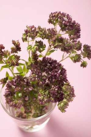 water thyme: Thyme flowers in a glass of water