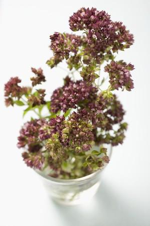 water thyme: Flores de tomillo en un vaso de agua