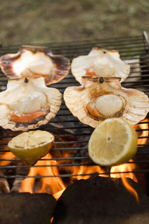 barbecues: Scallops on barbecue