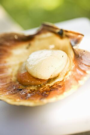 coquille: Grilled scallop LANG_EVOIMAGES